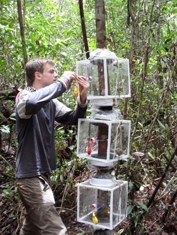 Amazônia é uma das principais fontes emissoras de metano do mundo