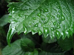 Você gosta do cheiro de chuva?